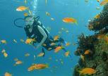 ישרוטל ים סוף אילת