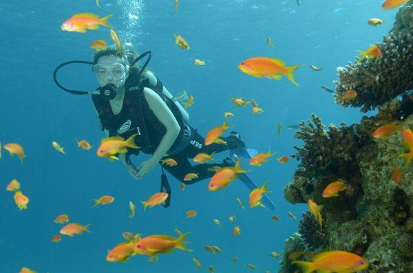 אילת ישרוטל ים סוף