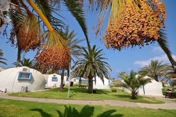 כפר הנופש דור אירוח כפרי בנתניה ומישור החוף - איגלו זוגי