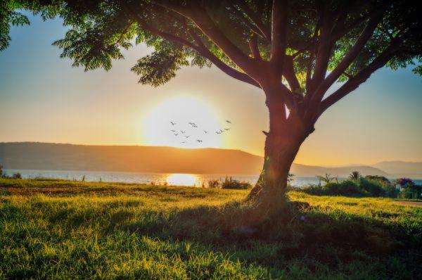 отдых на природе  Дария ( Хоф хаОн ) Тверия и Кинерет