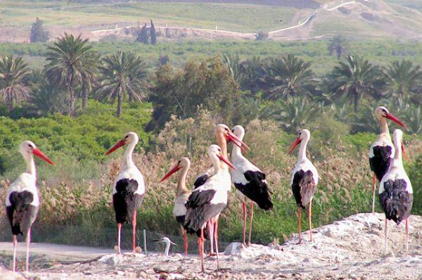 отдых на природе  Кфар Рупин в Тверия и Кинерет