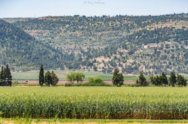 כפר נופש אחוזת נפתלי  בגליל עליון והגולן