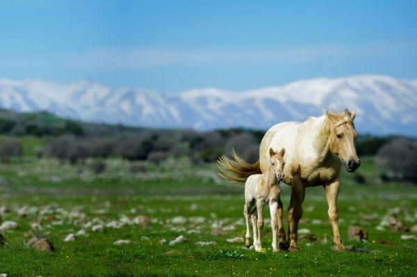כפר נופש אורטל בגליל עליון והגולן